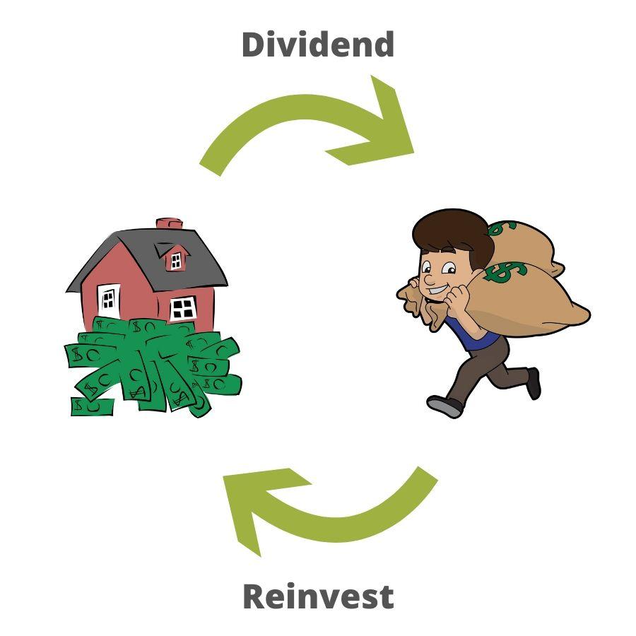 reinvest dividends